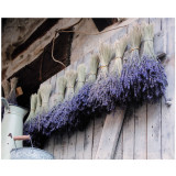 Canvas Dried Lavender 46 x 56cm